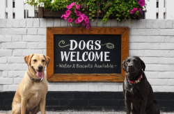 5 dog friendly pubs while the sun shines